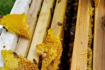 Bee Keeping3 2