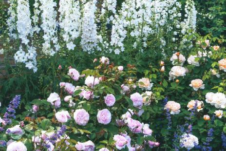 Garden Potential
